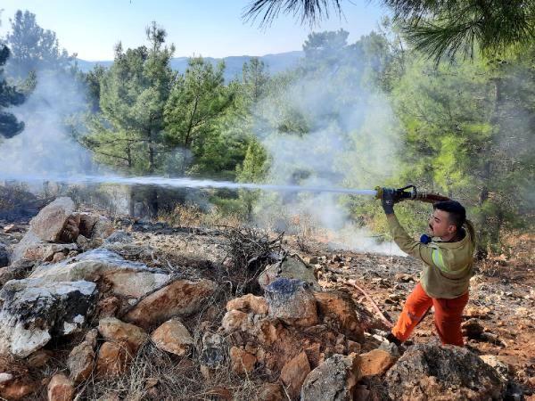 Manavgat'ta yanan orman alanında kaçak kesim yapıldığı belirlendi