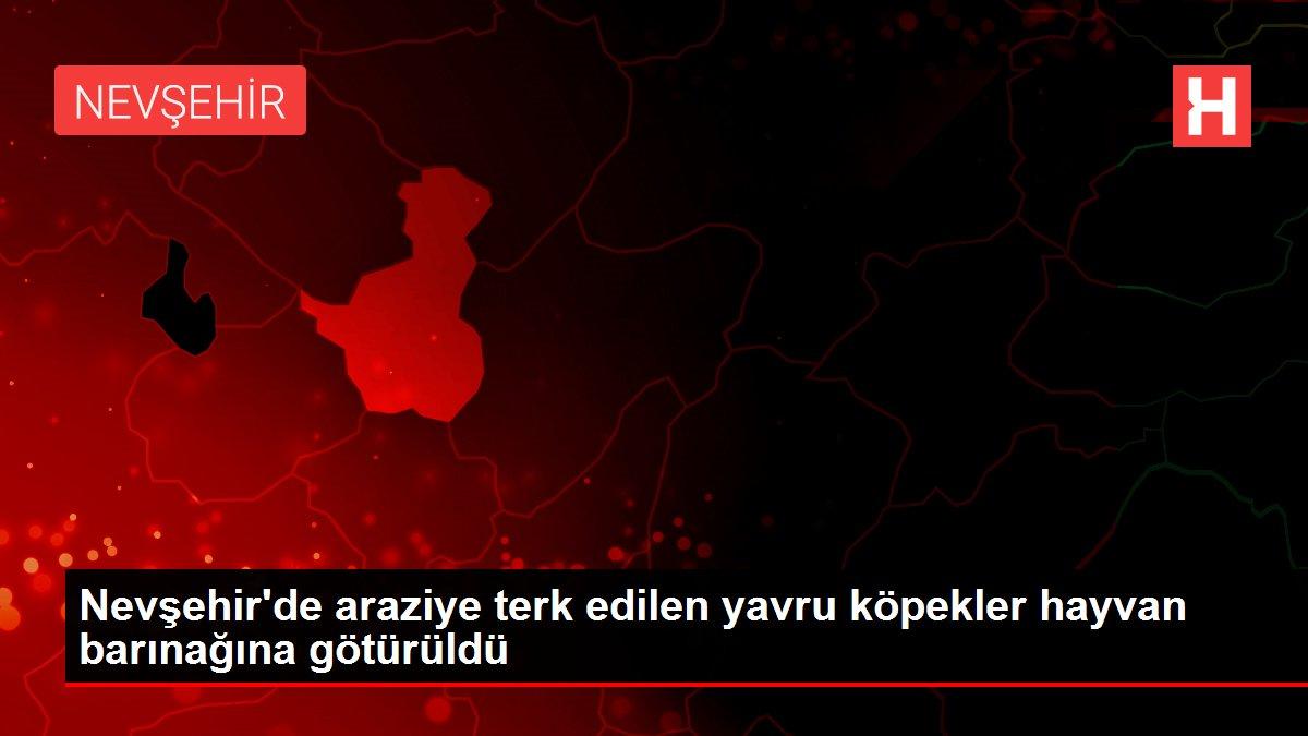 Nevşehir'de araziye terk edilen yavru köpekler hayvan barınağına götürüldü
