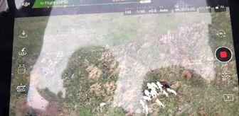 Çanakkale: Son dakika: Jandarma, kayıp koyunları dronla buldu