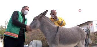 Rehabilitasyon Merkezi: Farklı türlerin dostluğu görenleri şaşırtıyor