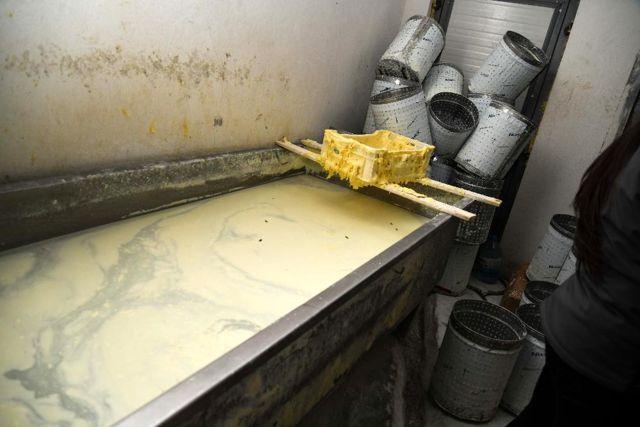 Sahte peynir üreten işletmeye engel! 55 bin lira ceza kesilen fabrika kapatıldı