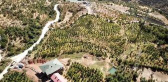 Bitlis: Kurduğu nar bahçesi, köylülere örnek oldu