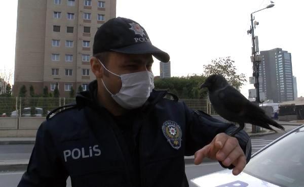 ATAŞEHİR'DE DENETİM YAPAN POLİS EKİPLERİNE KARGA SÜRPRİZİ