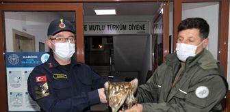Ankara: Baraj gölüne düşen kızıl şahini jandarma kurtardı