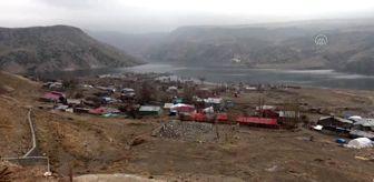 Karakurt: Kısmen boşaltılan köyde sahipsiz kalan köpeklere doğa koruma ekipleri sahip çıktı