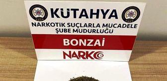 Eskişehir: Kütahya'da iki şüphelinin üzerinde bonzai ele geçirildi