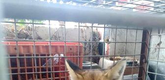 Edirne: Hayvan severler yaralı bulunca Milli Park Şefliğine getirdi