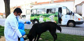 Muğla: Kısıtlamada sokak hayvanları Büyükşehir'e emanet