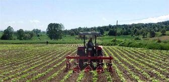 Samsun: Tarım danışmanı başına 46 bin TL destekleme verilecek