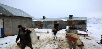 Ovacık: Tunceli'de, besicilerin zorlu kış mesaisi başladı