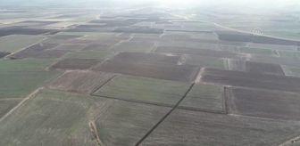 Kırklareli: KIRKLARELİ - Trakya'nın verimli topraklarında yeşeren buğdaylar çiftçinin yüzünü güldürüyor