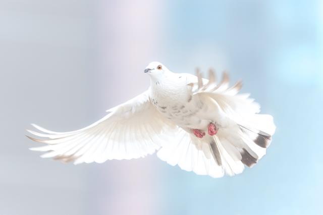 Rüyada güvercin görmek ne anlama geliyor? Rüyada beyaz güvercin görmek ne demek? (Diyanet)