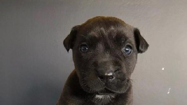 Son dakika haberleri... Sarıyer'de yavru köpeği feci şekilde öldüren şüphelinin 3 yıla kadar hapsi istendi