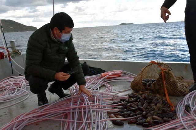 Muğla'da kaçak deniz patlıcanı avcılığına yönelik denetimler