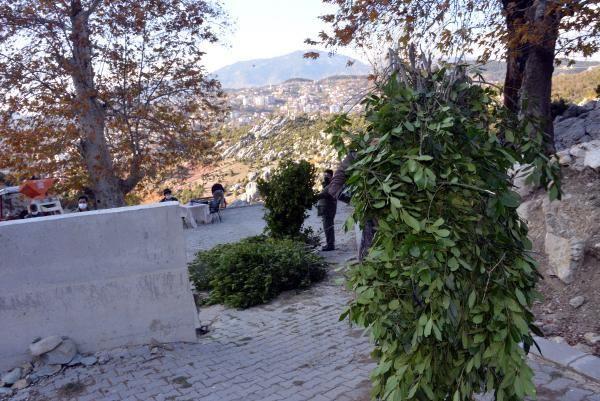 Dağlardan topladıkları defneden günlük 500 lira kazanıyorlar