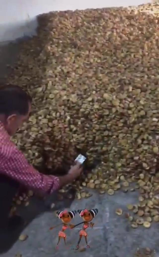 Sosyal medya bu görüntülerle çalkalandı! Farelerle dolu kuru incir deposu