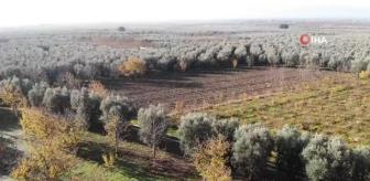 Kaçak Kazı: İznik'teki dikilitaş, 2 bin yıldır ayakta