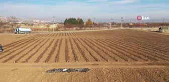 Derbent: Konya'da tıbbi aromatik bitki yetişecek