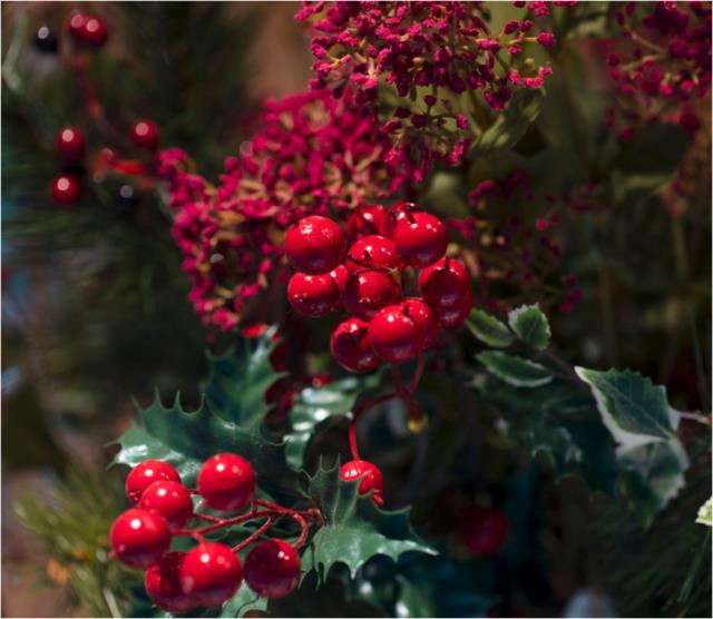 Yılbaşı çiçeği nedir? Yılbaşı çiçeği (kokina) bakımı nasıl yapılır? Yılbaşı çiçeği fiyatı ne kadar?