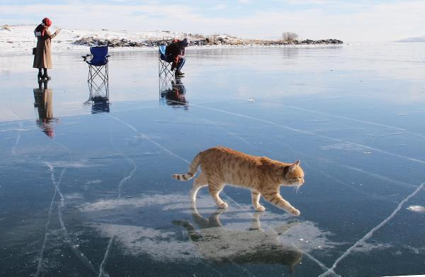 Son dakika haber... Buz tutan Çıldır Gölü'nde renkli görüntüler