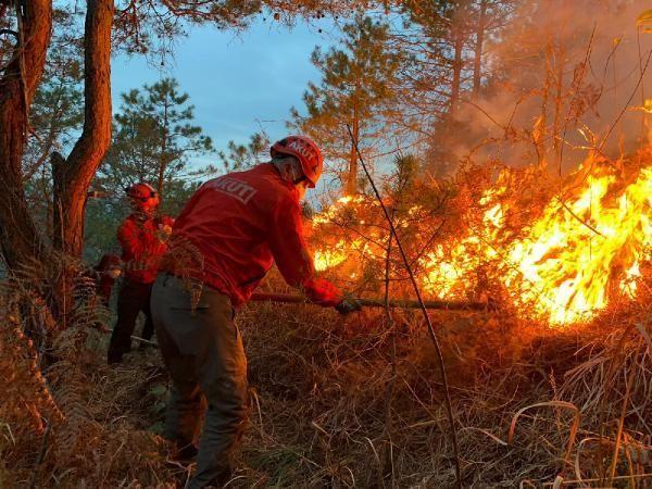 Doğu Karadeniz'de, 4 ilde çıkan orman yangınları söndürüldü