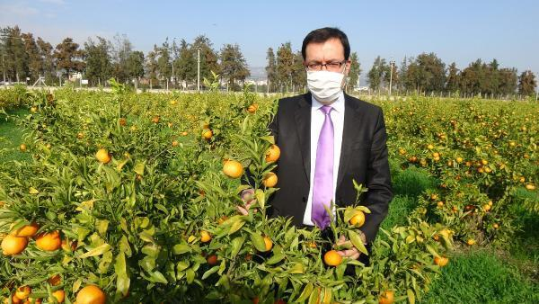 Erdemli'de geliştirilen 2 mandalina türü tescile hazırlanıyor