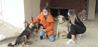 Giresun: İki arkadaş, sokak sokak dolaşarak hayvanları besliyor