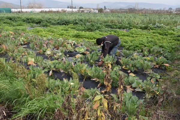 İzmir'de yetiştirdiği organik sebzeleri İstanbul'da satıyor