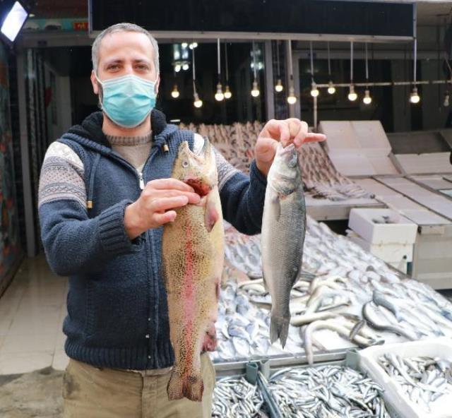 Sahtekarlar bu kez fiyatıyla cep yakan balığa sardı! Balıklara tartıda ağır gelsin diye olta kurşunu yutturuyorlar