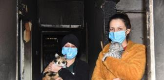 Nuran Şahin: Yangında kedileri kurtarılan Sevgi: Kedilerime bir şey olsaydı kahrolurdum