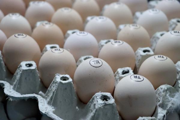 Yumurtada üretim düşünce fiyatlar arttı