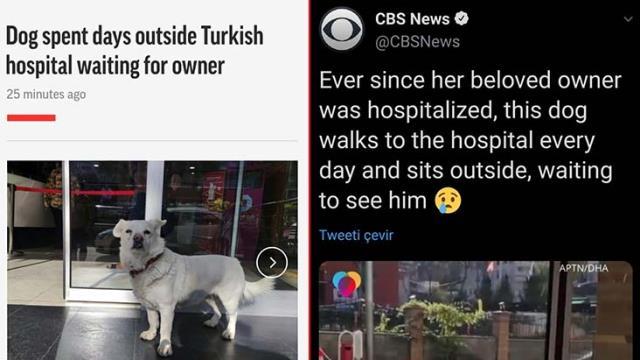 Hastanedeki sahibini günlerce kapıda bekleyen Boncuk, dünya basınında manşetleri süsledi