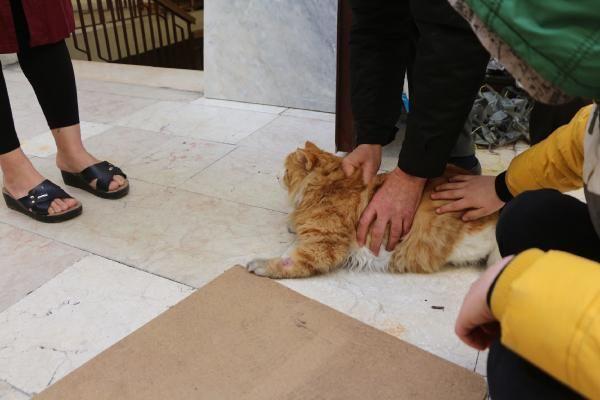 Ailenin kayıp 'Norveç orman kedisi', çatı katında bulundu