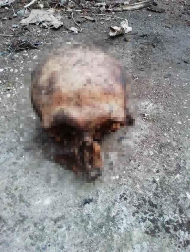 Evinin bahçesinde temizlik yapan vatandaş, insana ait kafatası buldu