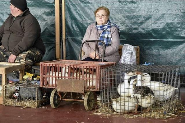 Rusya ve Cezayir'den sonra İran'da da kuş gribi alarmı! Yüz binlerce hayvan telef edildi