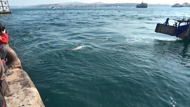 Son Dakika   Beyoğlu'nda ölü yunus karaya vurdu