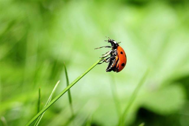Rüyada böcek görmek ne anlama geliyor? Rüyada sihay böcek görmek, evde böcek görmek, renkli böcek görmek nasıl tabir edilir?