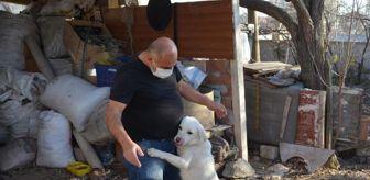 Mikail Yıldırım: Polisin kurtardığı köpeği, veterinere götüren şoför sahiplendi