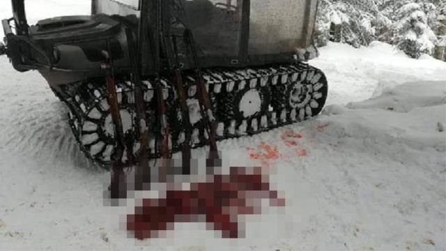 Karacayı vurup parçalara ayıran 7 kişi yakalandı