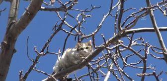 Hasan Coşkun: AFYONKARAHİSAR - Ağaçta mahsur kalan kediyi itfaiye ekipleri kurtardı