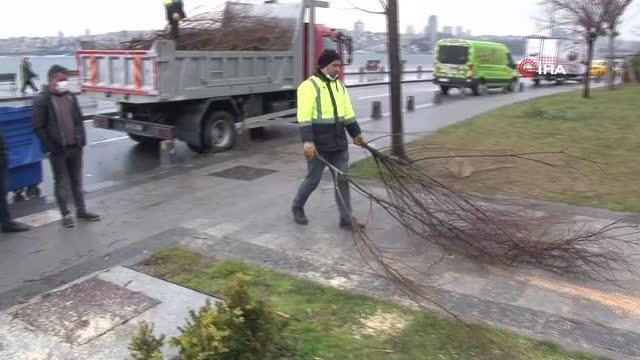 Üsküdar'da gece yarısı elektrikli testereyle ağaç kesenler suçüstü yakalandı