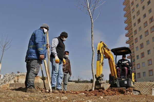 MARDİN Yeşil Mardin için hedef 50 bin ağaç