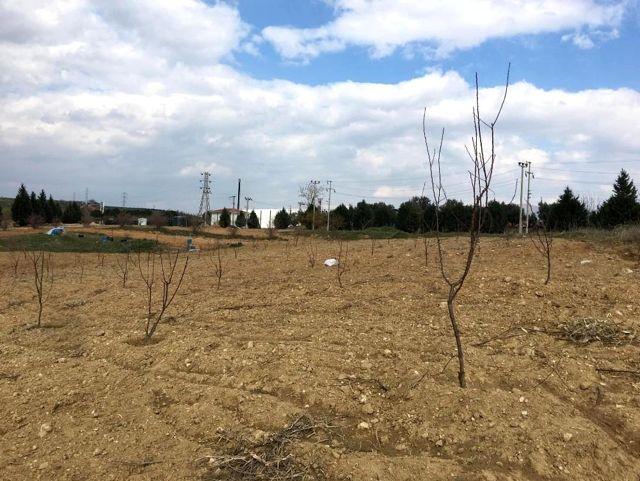 Salihli OSB'den ağaç seferberliği