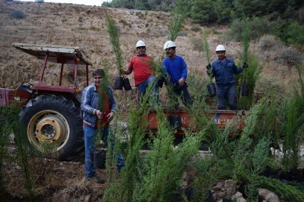 Enerji şirketinden 3 yılda 1 milyon ağaç