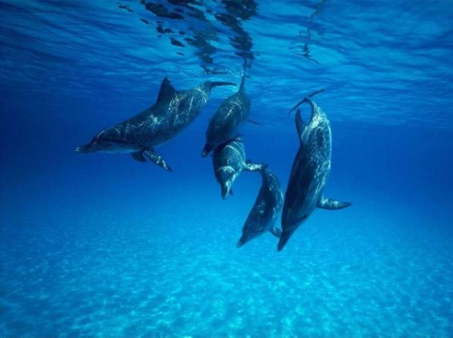 Rüyada Yunus Balığı görmek nedir? Rüyada Yunus Balığı yakalamak, beslemek, yüzmek, sevmek ne anlamlara gelir?