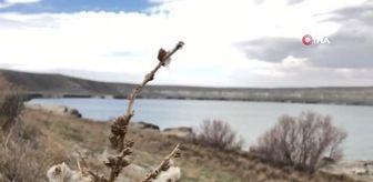 Meke Gölü: Acıgöl'de su seviyesi düşüyor çatlaklar oluşuyor