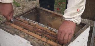 Arı Yetiştiricileri Birliği: Son dakika haber: İklim değişikliği ve varroa canlısı, bal üretimini düşürdü