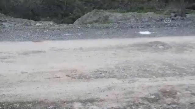 Son dakika gündem: Başkentte boş arazide çok sayıda ölü köpek bulundu