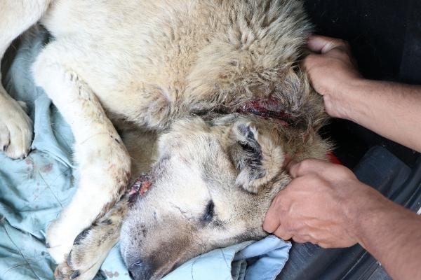 Boynundaki iple kaderine terk edilen köpek için seferber oldular