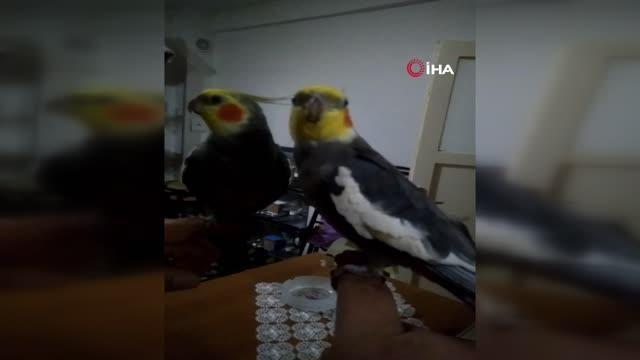 Her sabah papağan Bitik'in söylediği 'Ölürüm Türkiye'm' parçasıyla kalkıyorlar
